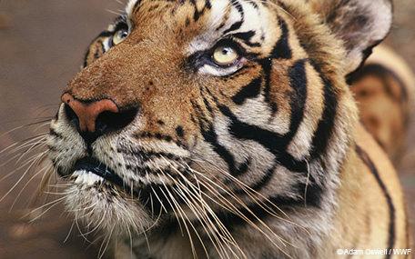 WWF Donation