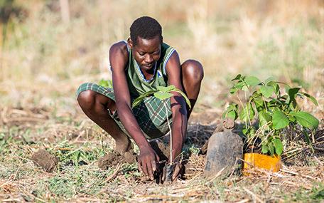 Trädplantering, Sydsudan Gåvobevis