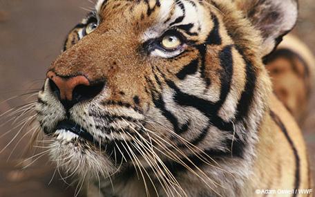WWF Donasjonsgavekort
